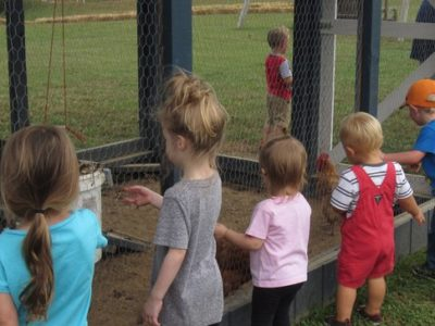 Children playing with chickens outside
