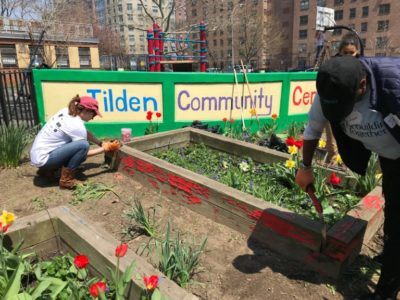 Tilden Community Center Garden in Brownsville NY